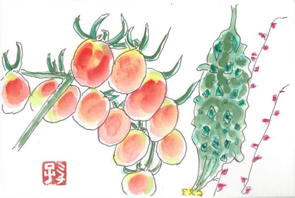 プチトマトとゴーヤー