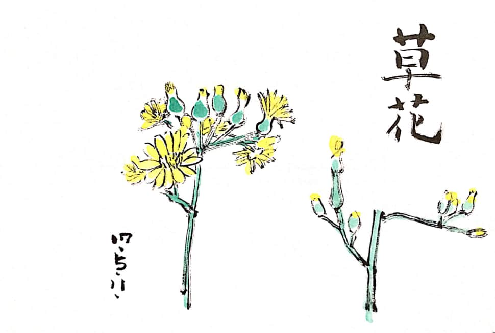 五月十一日の草花