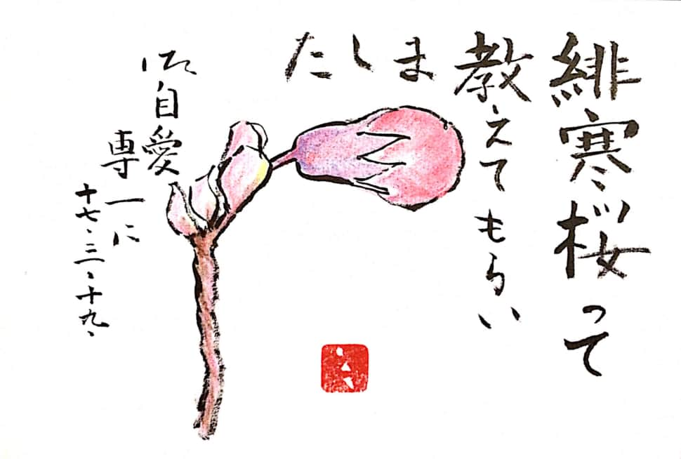 寒緋桜って教えてもらいました 御自愛専一に