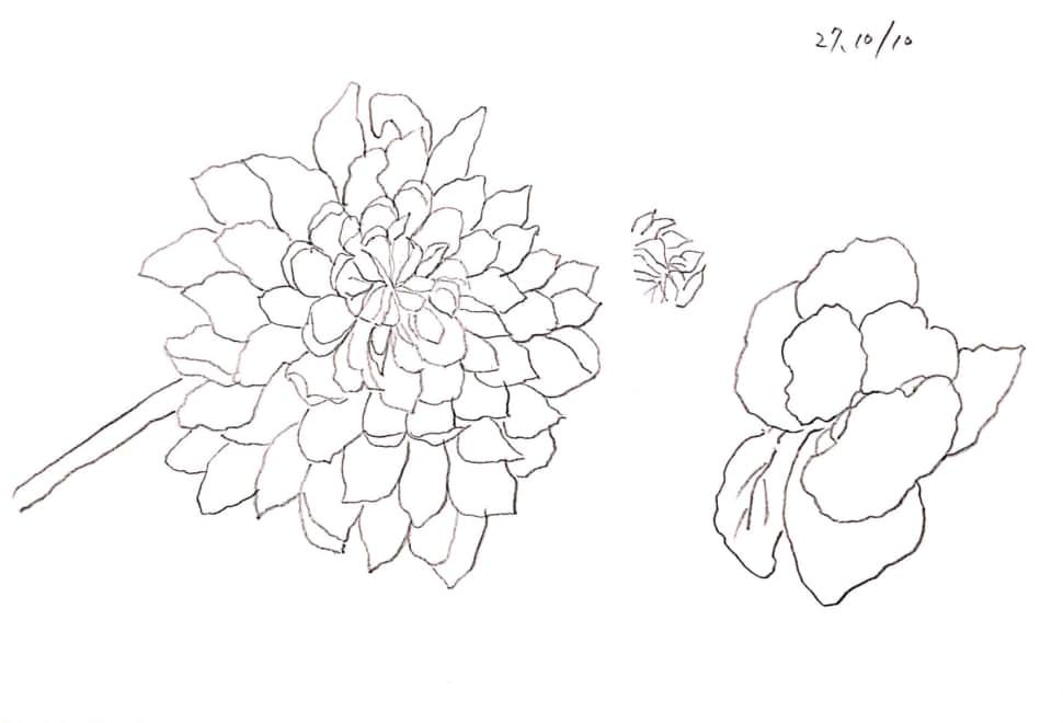 菊のスケッチ