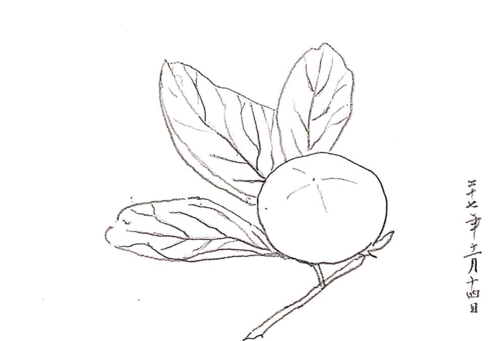 枝付きの柿 デッサン