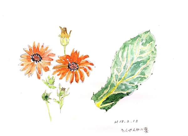 きんせんかの花と葉