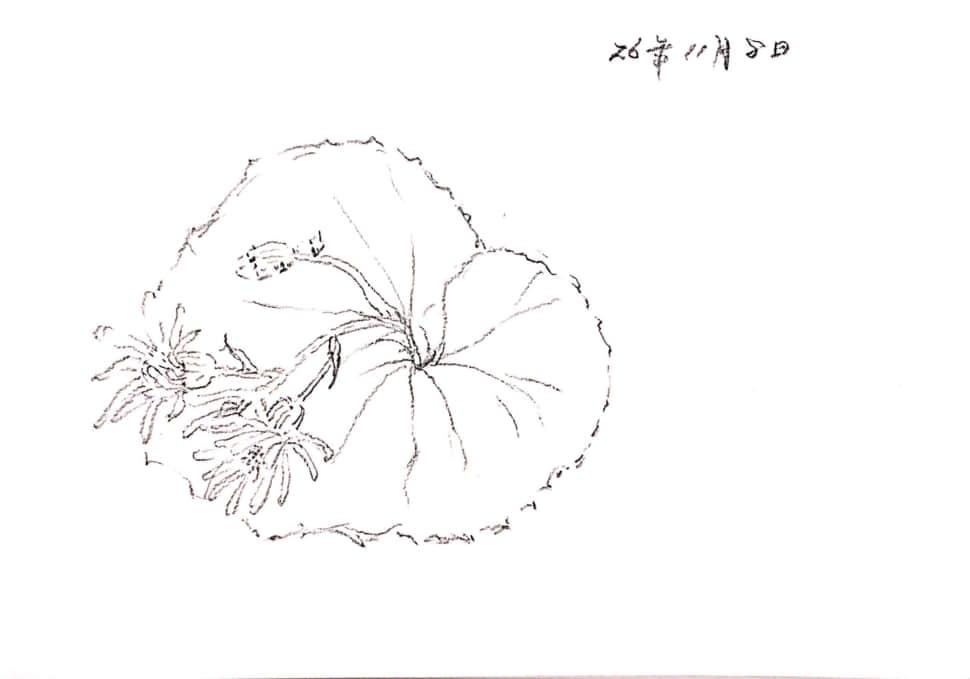 11月の花のスケッチ
