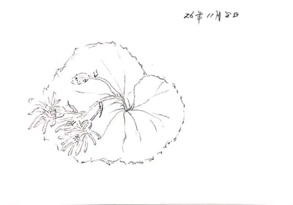 十一月の花のスケッチ