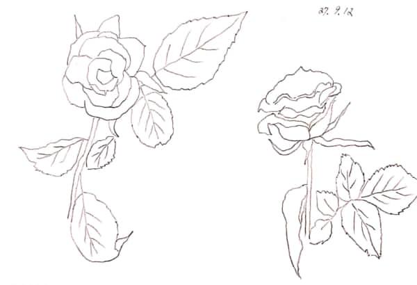 九月のバラ