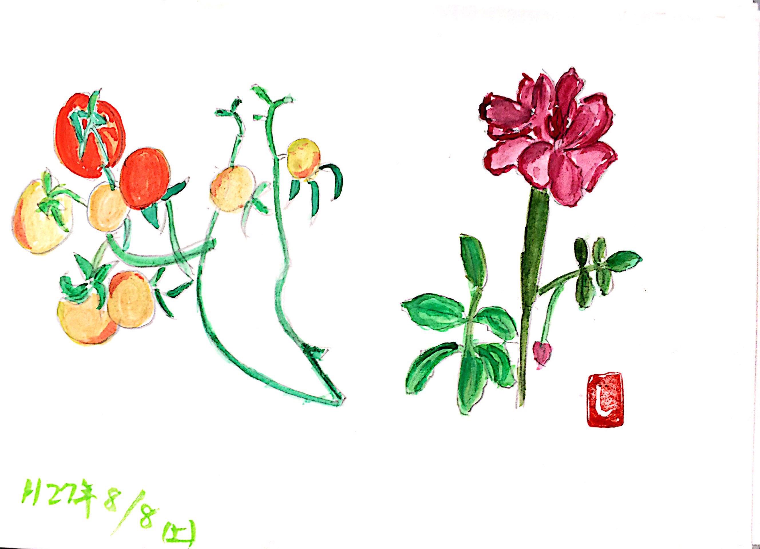 花とミニトマト