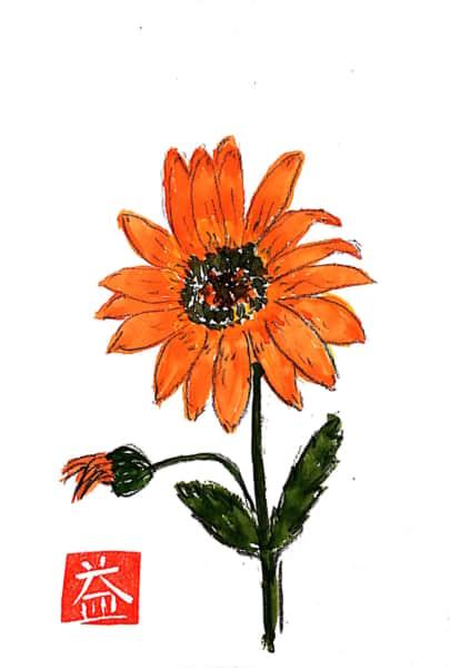 オレンジ色のヒナギク