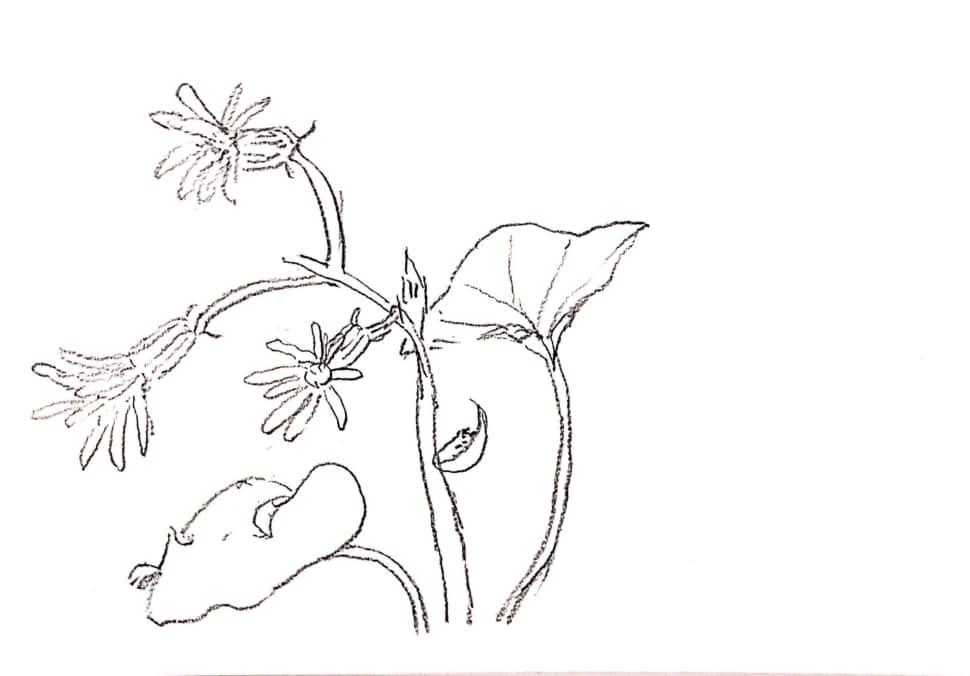 ハート型の葉っぱのお花