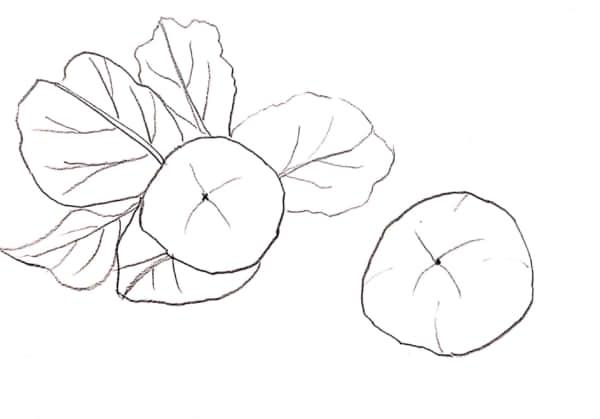 柿の実のスケッチ