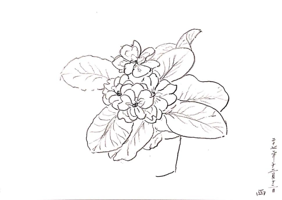 冬の花のデッサン