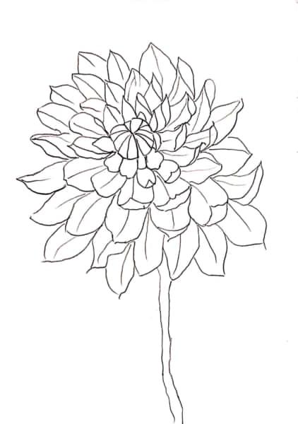 菊の花のスケッチ
