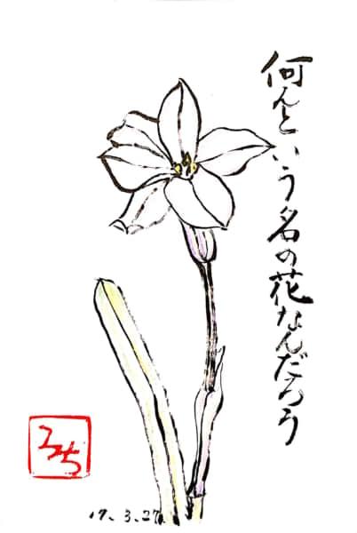 何という名の花なんだろう
