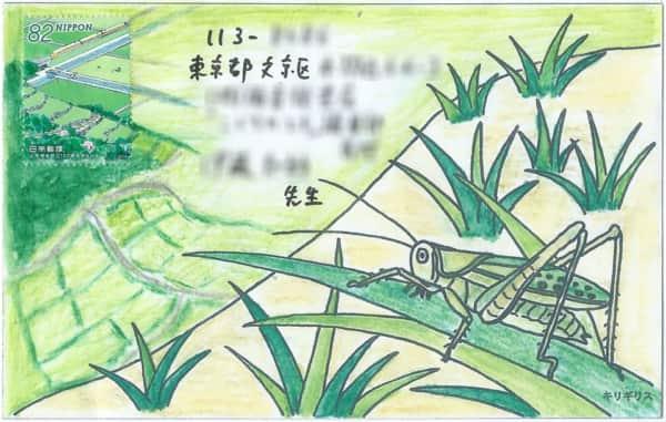 田んぼを見下ろすトノサマバッタの絵封筒