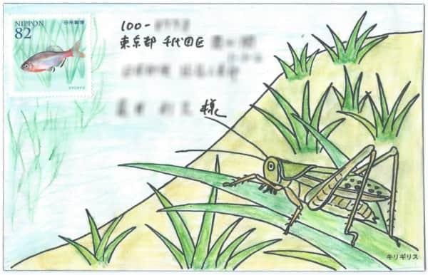 田んぼのタナゴとキリギリスの絵封筒