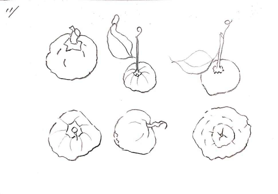 柚子のデッサン、いろんな角度から。