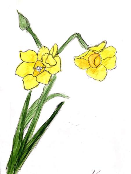 凛とした、黄色い水仙