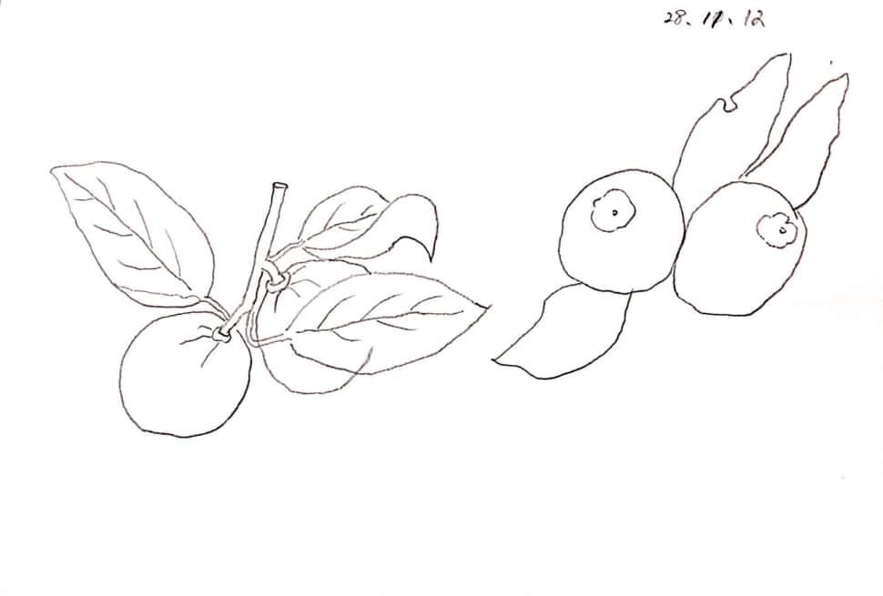 仲良く並んだ柚子の姉妹