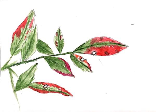 赤と緑の混じり合った葉