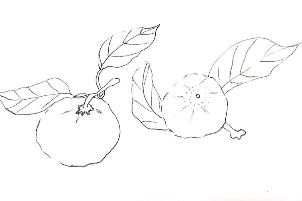 柚子の兄弟のデッサン