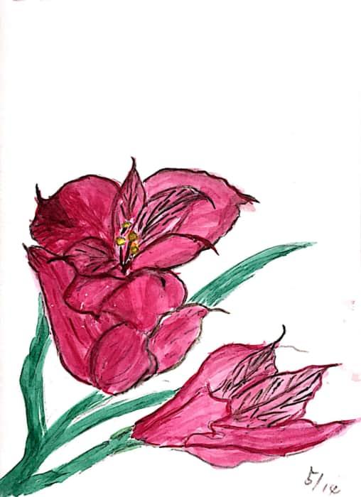 五月の赤い花 (花の名前わかる方教えてください><)