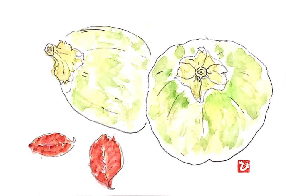 青い柿の実と葉