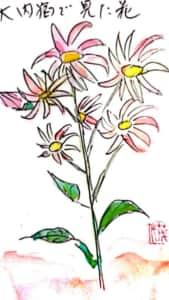 大内宿で見た花