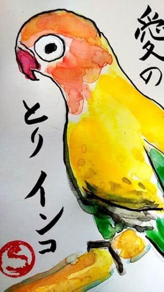 愛の鳥 インコ