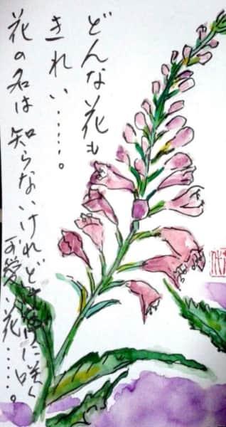 どんな花もきれい…。花の名は知らないけれどけなげに咲く可愛い花