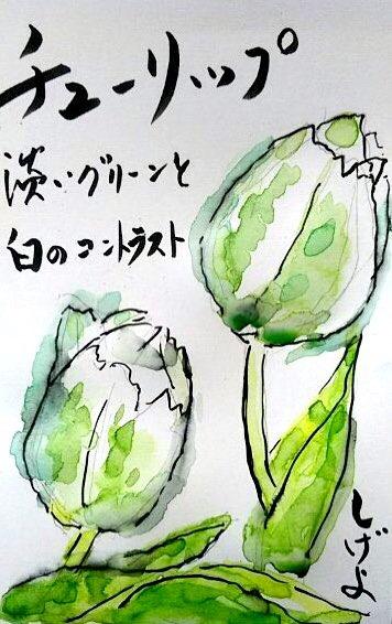 チューリップ 淡いグリーンと白のコントラスト