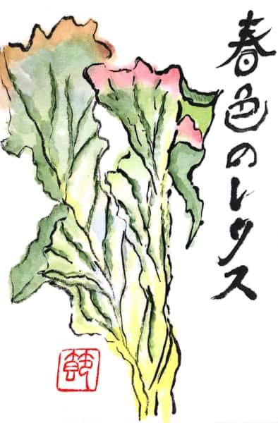春色のレタス