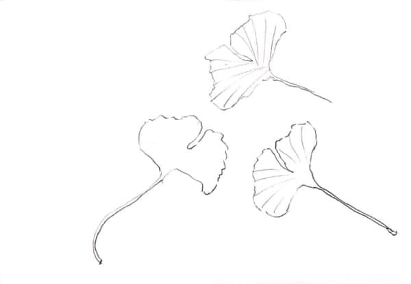 イチョウの葉のデッサン