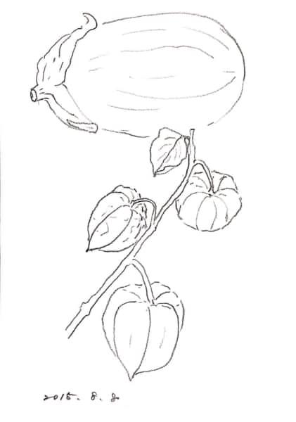 茄子とほおずきのデッサン