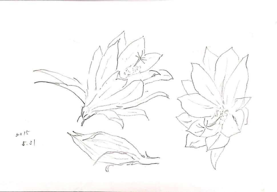 五月の花のデッサン