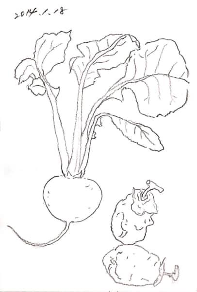 蕪と、干し柿のデッサン