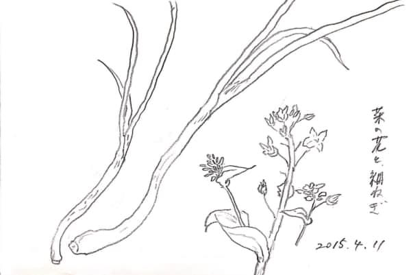 菜の花と細ねぎのデッサン