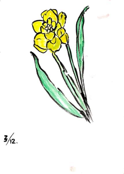 黄色い八重咲き水仙