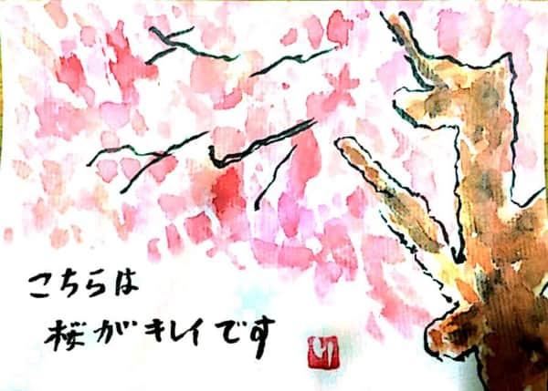 こちらは桜がキレイです