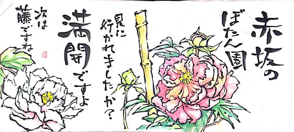 赤坂のぼたん園 満開ですよ 次は藤ですね