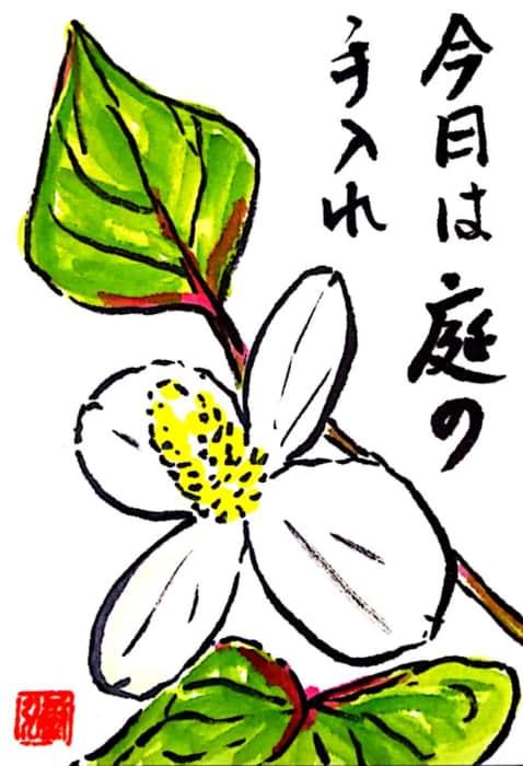 今日は庭の手入れ ~どくだみの花~