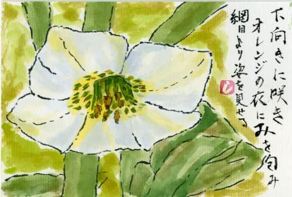 ほおずきの花