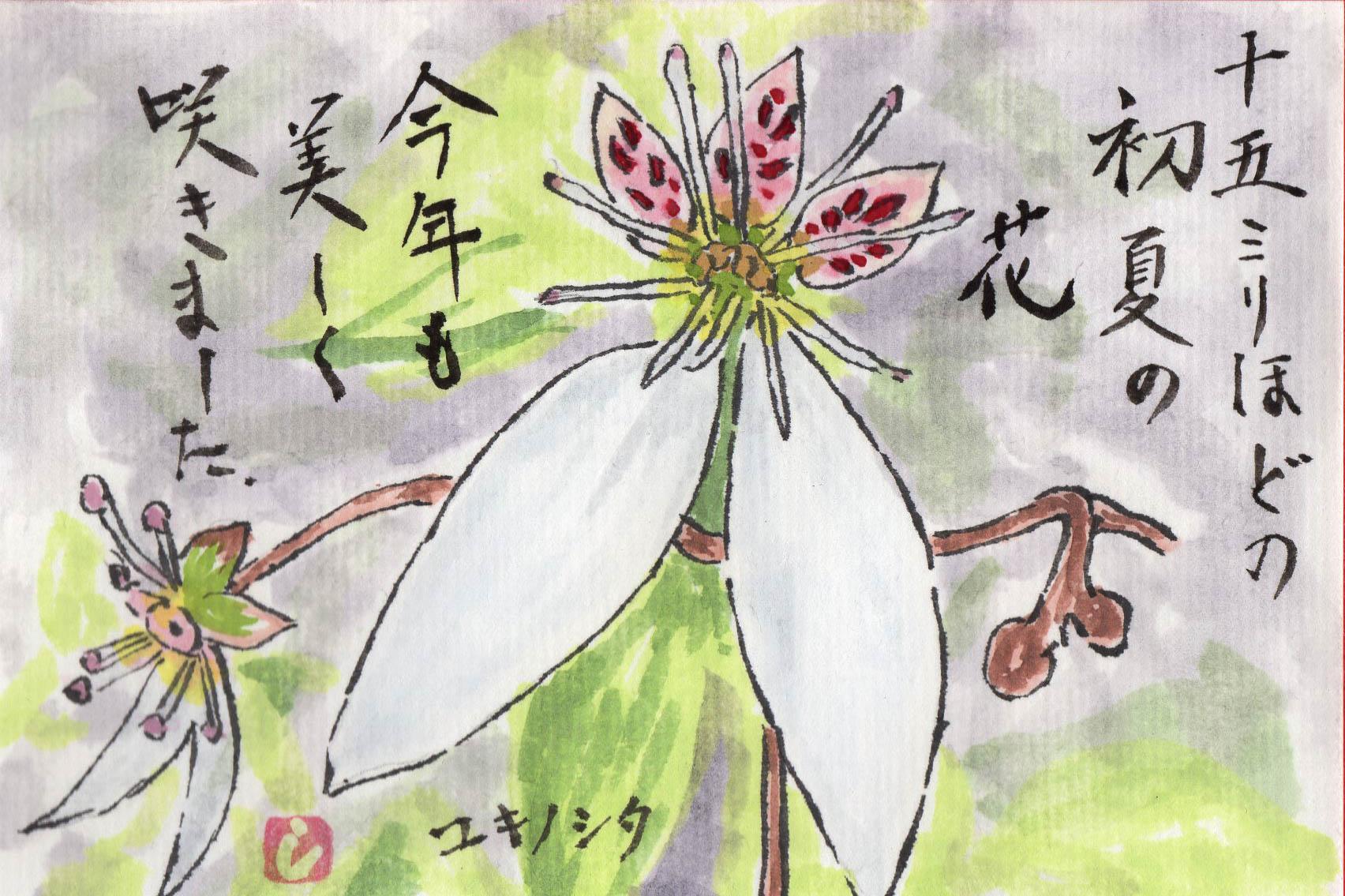 ユキノシタ
