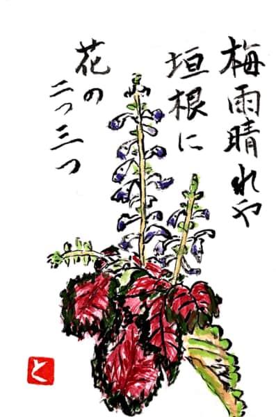 梅雨晴れや 垣根に花の二つ三つ