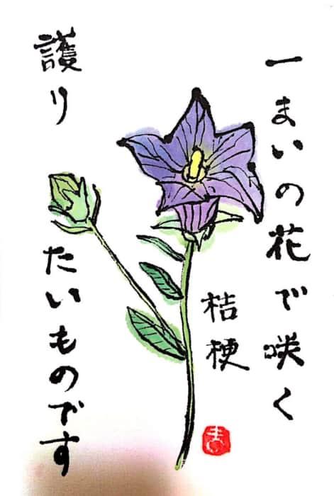 一まいの花で咲く桔梗 護りたいものです