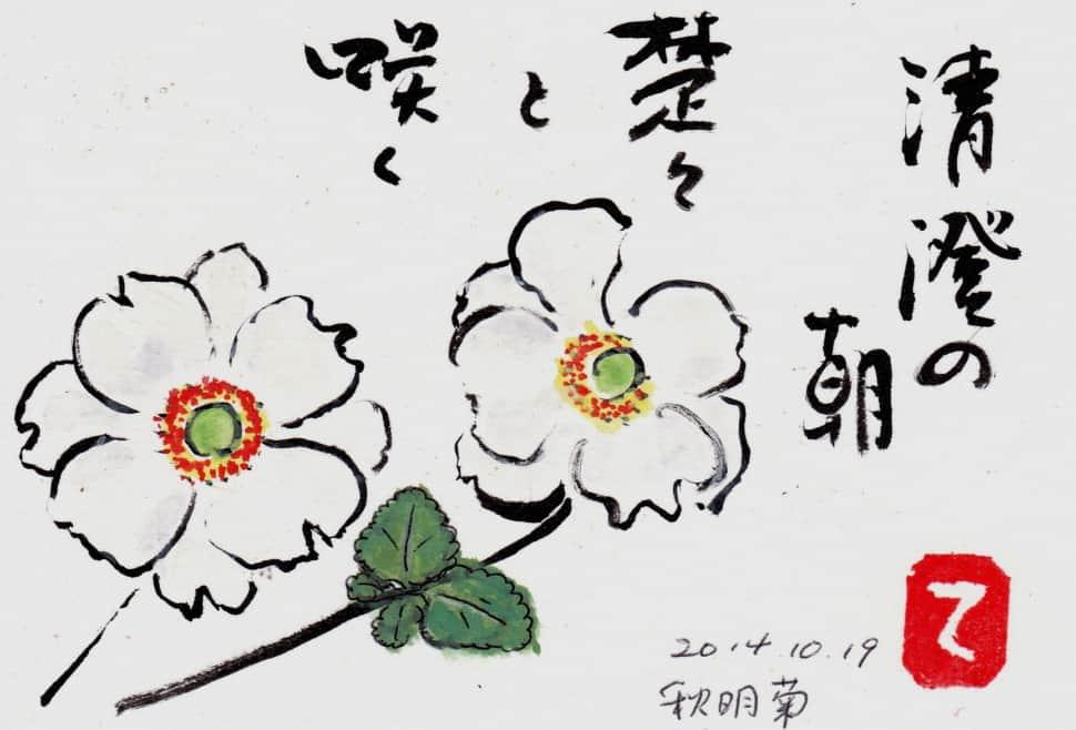 清澄の朝 楚々と咲く秋明菊