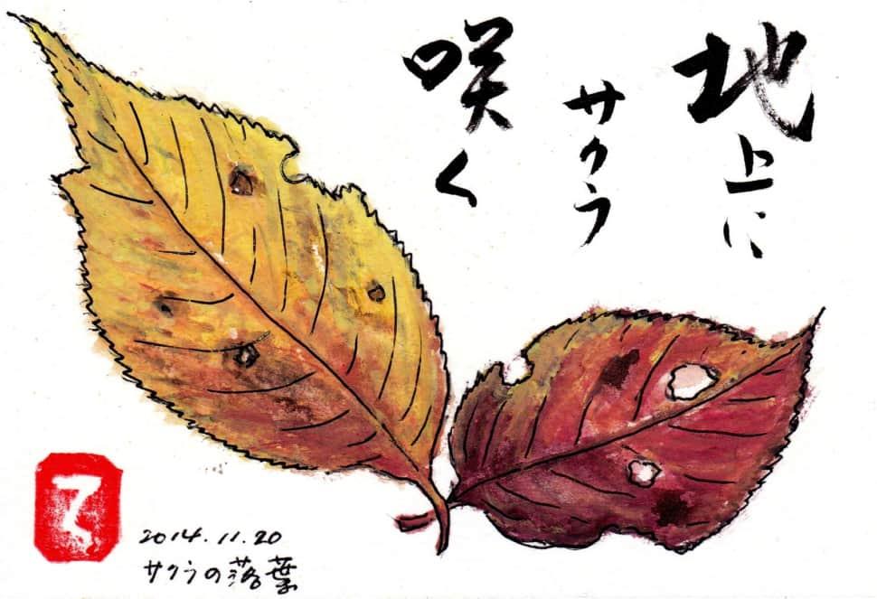 地上にサクラ咲く 〜サクラの落ち葉〜