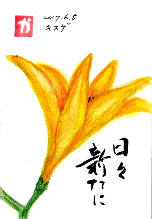 キスゲの花 〜日々新たに〜