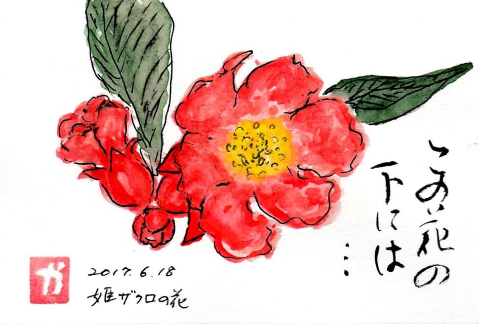この花の下には… 〜姫ザクロの花〜