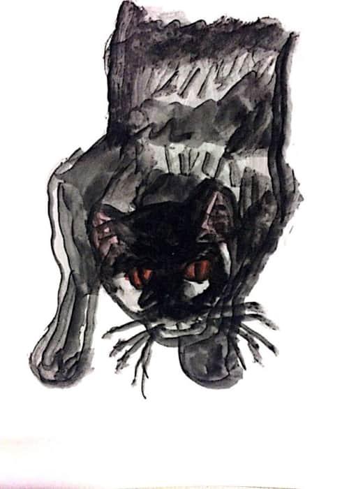 愛猫タロー