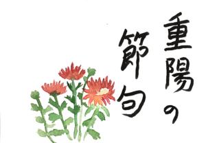 重陽の節句の小菊