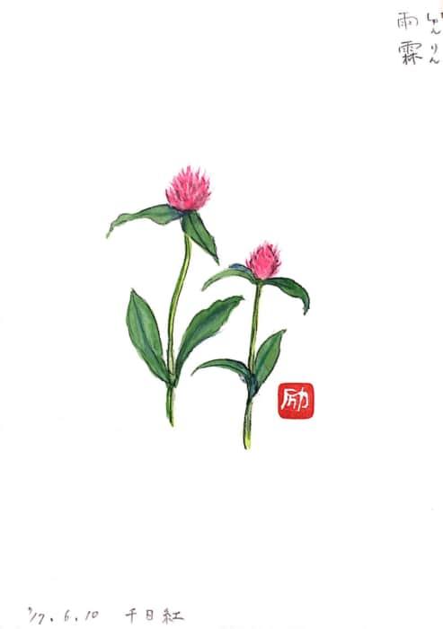 千日紅の花
